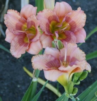 Compass Point South