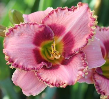 Continuous Beauty