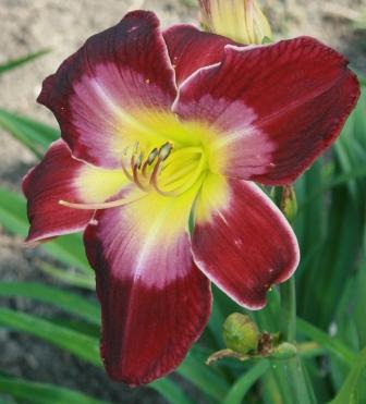 Devil's Magic