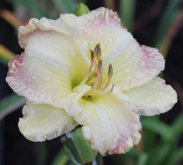 Fancy Border