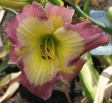 Fashion File