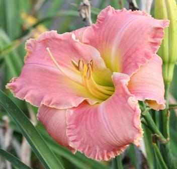 Finally Letting Go