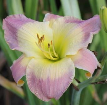 Franklin Edward League