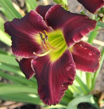 Ghost of Thunder Road