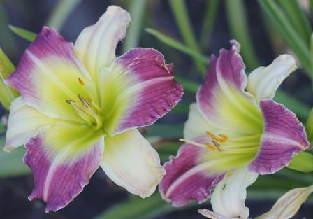 Glorious Destiny