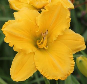 Concrete Blond