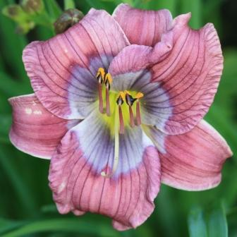 Dixie Blues